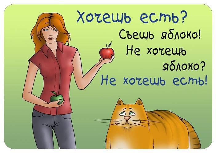 Почему кошка похудела, что делать? возможные причины похудения у кошек и сопутствующие симптомы