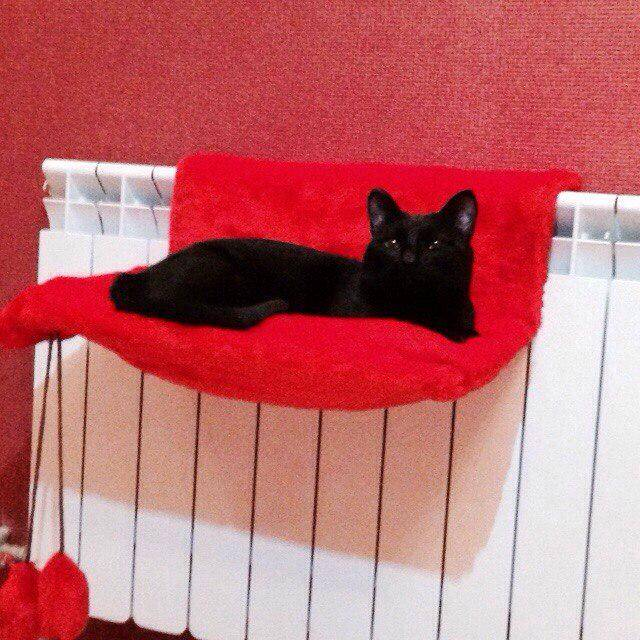 Лежанка для кошек своими руками — как обустроить место питомцу
