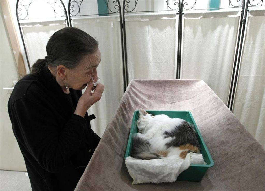 Все об эвтаназии кошек: за и против, показания, процесс