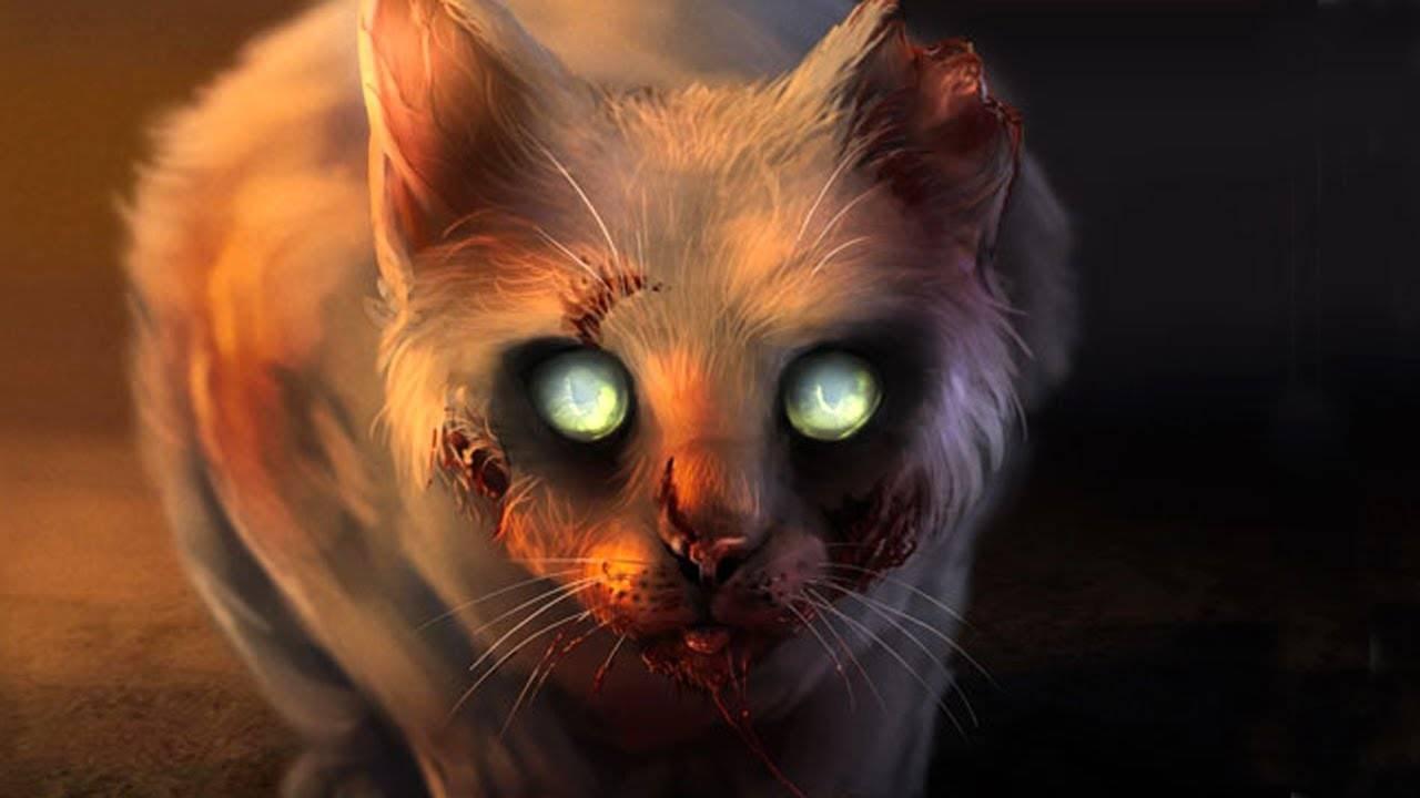 Почему нельзя смотреть кошкам в глаза?