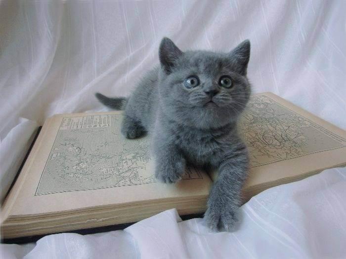 Как заставить кота пить воду? - запись пользователя дилара (dilaro4ka) в сообществе домашние животные в категории помогите советом - babyblog.ru