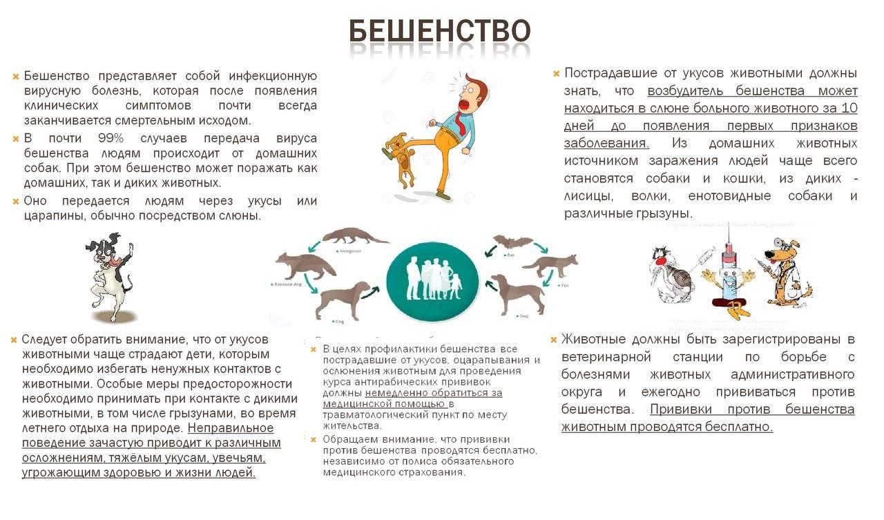 Признаки бешенства у человека: как проявляются симптомы после укуса кошки