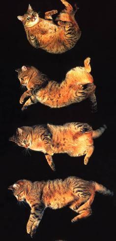 Кот тянет лапы – возможные причины и лечение. почему кошки так часто потягиваются кошка потягивается
