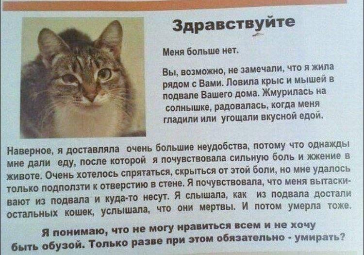 Правильное воспитание кошки: советы и рекомендации экспертов