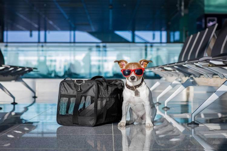 Как взять собаку вавтопутешествие поевропе