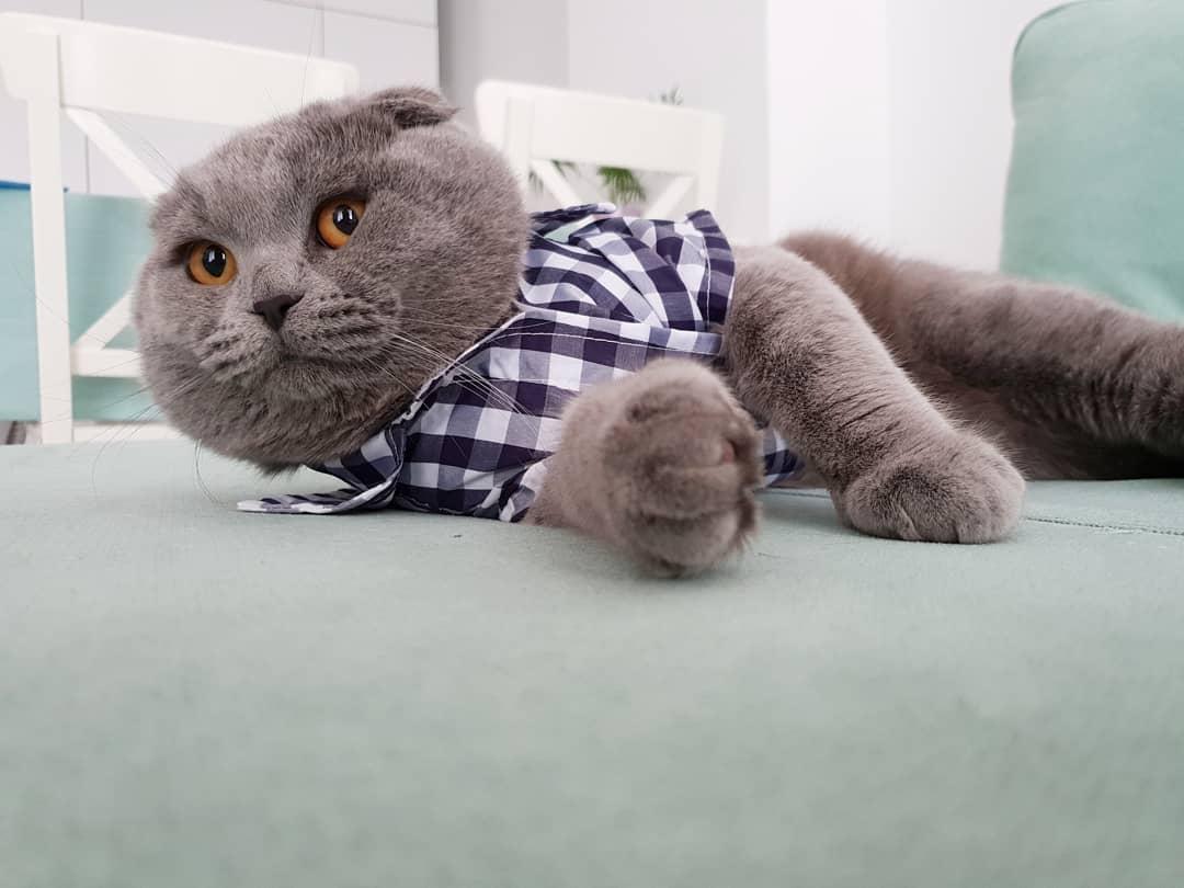 Как дрессировать кошку в домашних условиях: полезные советы