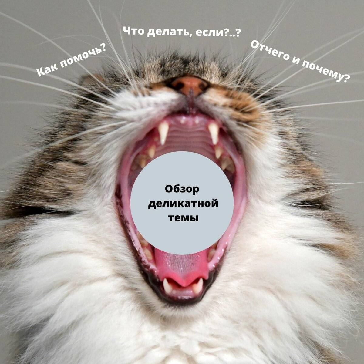 Корм для кошек orijen cat fit & trim grain free