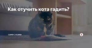 Советы и средства как отучить кошку и кота гадить в неположенном месте