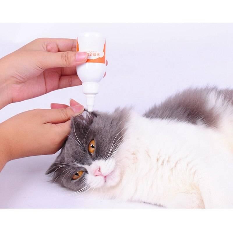 Залог здоровья: правила чистки кошачьих ушей