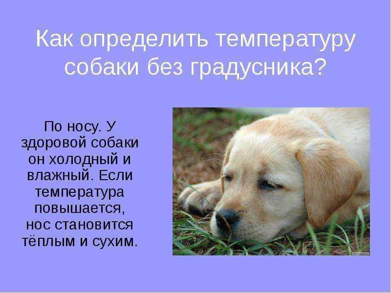 Какой должен быть нос у здоровой собаки