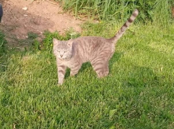 Что происходит в организме с кошки когда она гуляет | my darling cats