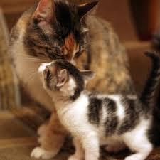 Что делать если кошка не кормит новорожденных котят