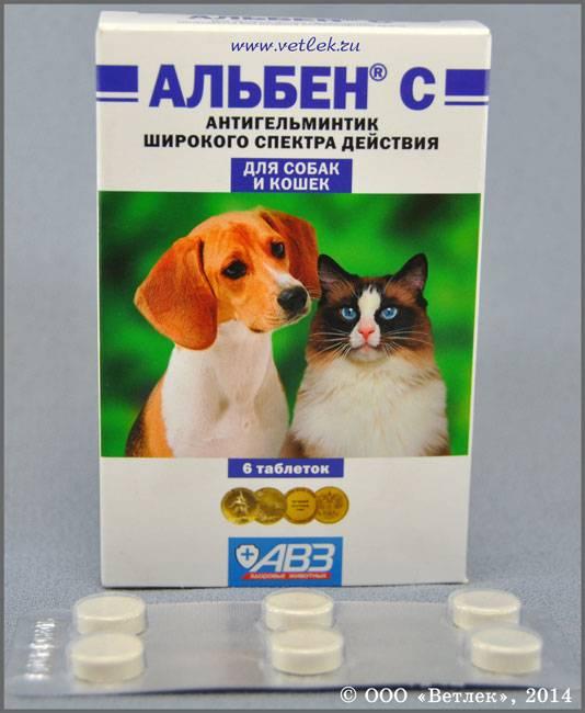 Альбен для кошек - 95 фото применения лекарства для дегельминтизации питомца