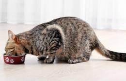 Кормление кошек: сухой корм или натуральное питание для кошек