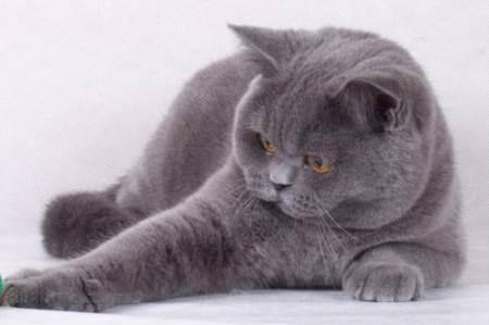 В каком возрасте брать котенка?