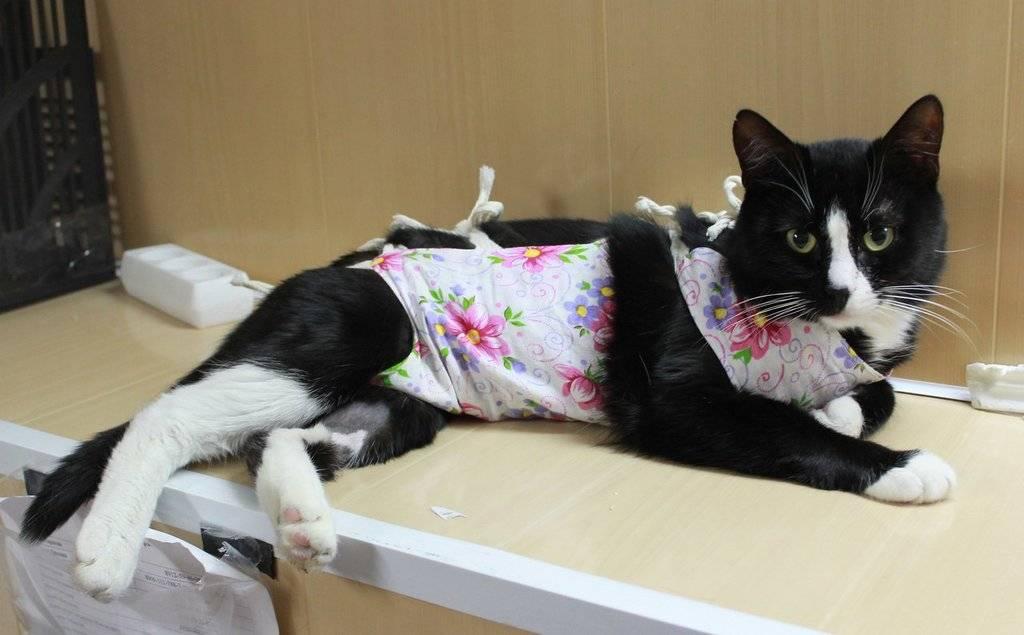 Воротник для кошки своими руками: как сделать и надеть, сколько носить после операции?