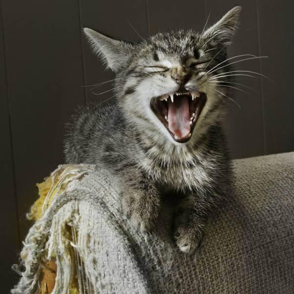 Когтеточки своими руками (73 фото): какую выбрать веревку для когтеточки? как сделать когтеточку для кота в домашних условиях? пошаговая инструкция