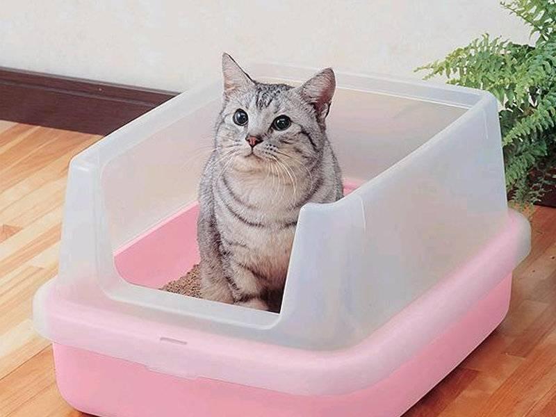 Обзор домиков и другого оборудования для кота мейн-куна
