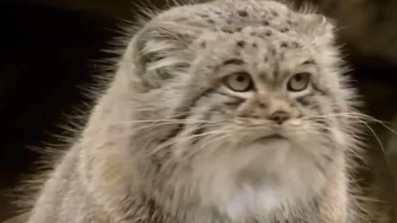 Кошка в истории человечества