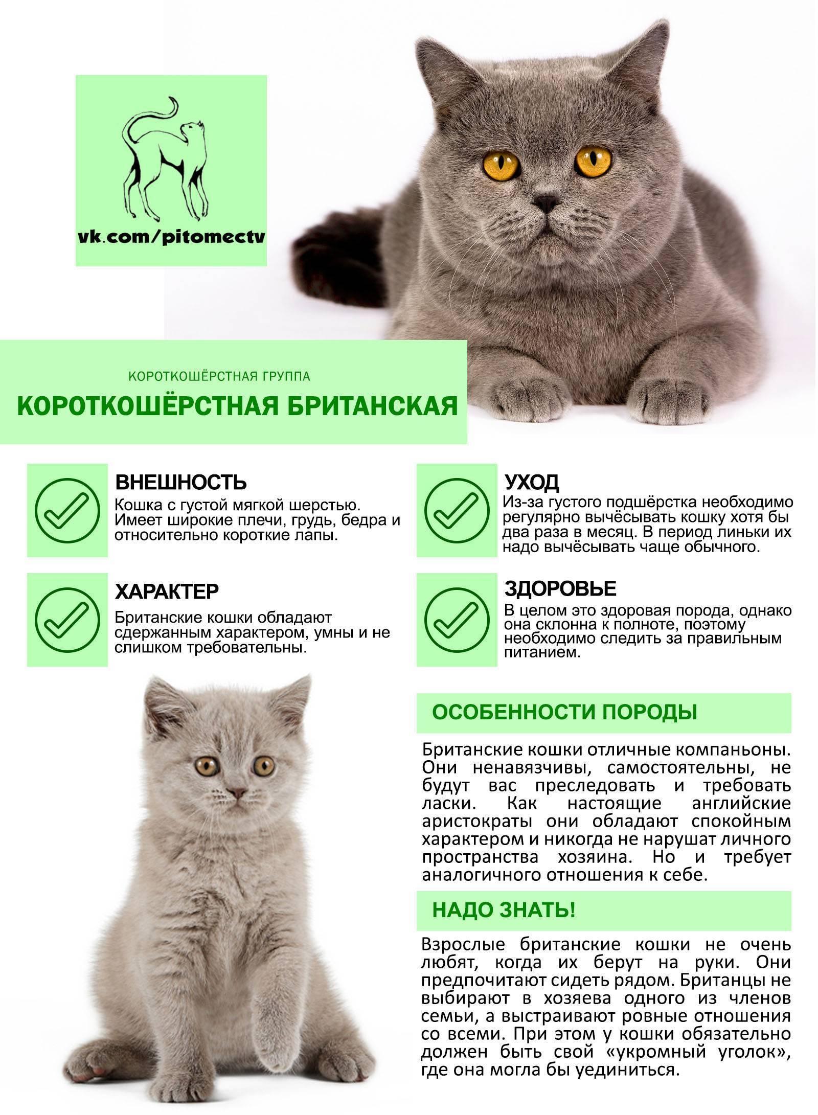Как правильно подобрать корм для котенка 3 месяца?