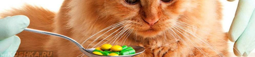 Отравление у кошек — симптомы и лечение в домашних условиях