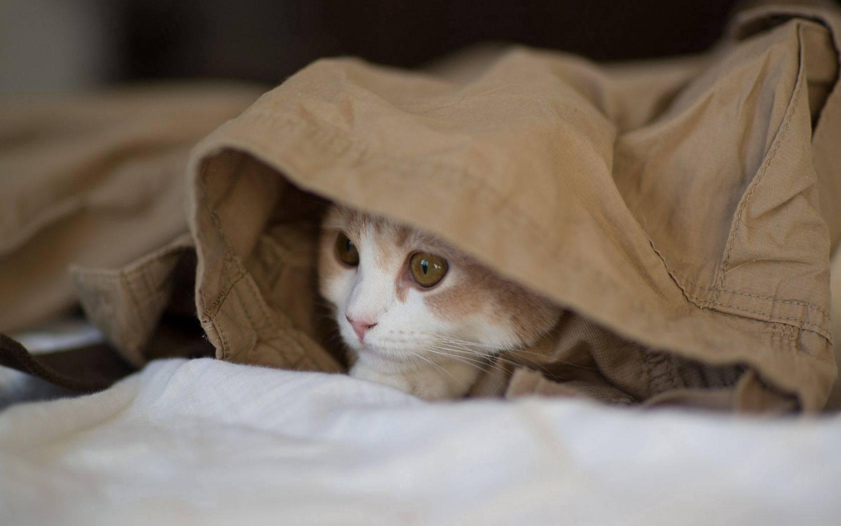 Почему кошка прячется под одеяло: топ-7 причин почему кошка прячется под одеяло: топ-7 причин
