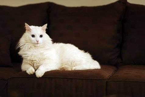 Почему кошка должна жить в доме: 5 причин