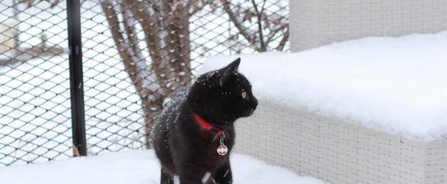 При какой температуре кошки могут жить на улице: какие породы не переносят холода. мерзнут ли кошки зимой? какую минусовую температуру могут выдержать кошки - медицинская энциклопедия