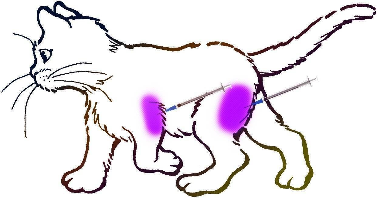 Как сделать укол кошке в холку. инструкция для хозяев