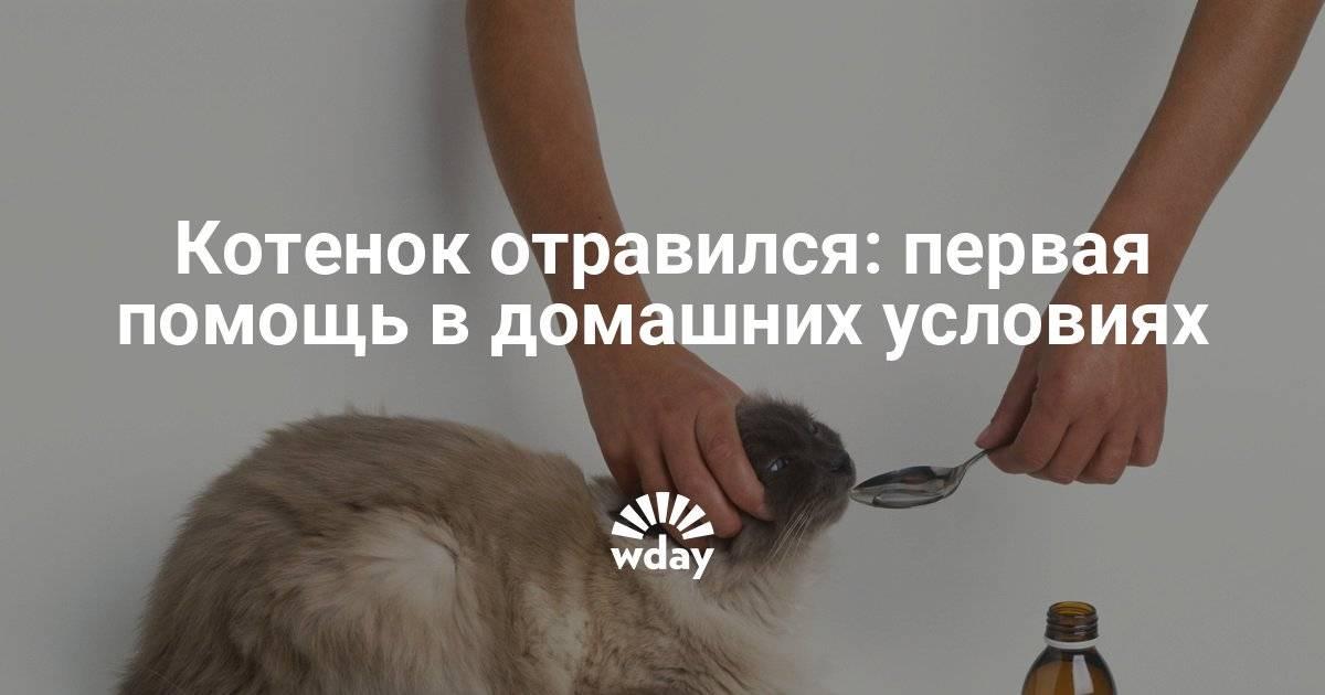 Чем кормить кота после отравления и рвоты: кормом крысиным ядом