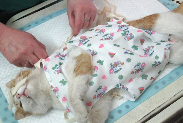 Уход за кошкой после стерилизации: всё об операции и уходе