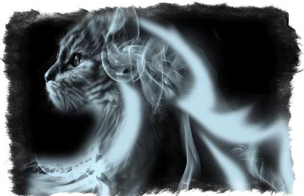Куда попадают кошки после смерти, есть ли у них душа: ответы экстрасенсов, точка зрения православия