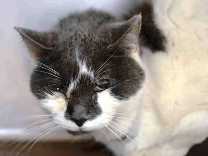 Обезвоживание у кошек - симптомы, лечение, препараты, причины появления   наши лучшие друзья