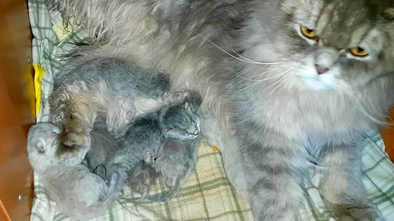 Почему кошка не кормит котят. чем помочь голодным малышам