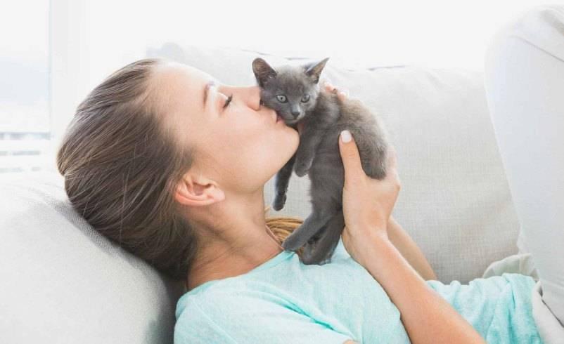 Почему кошке нельзя спать в кровати между супругами: приметы про кошек