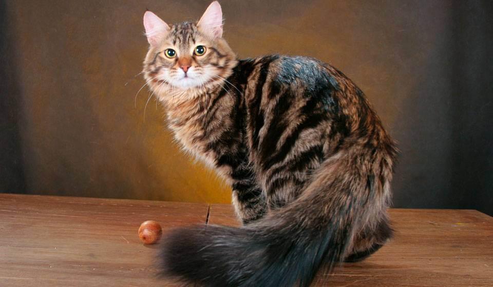 Как определить возраст котенка, узнать сколько месяцев в домашних условиях