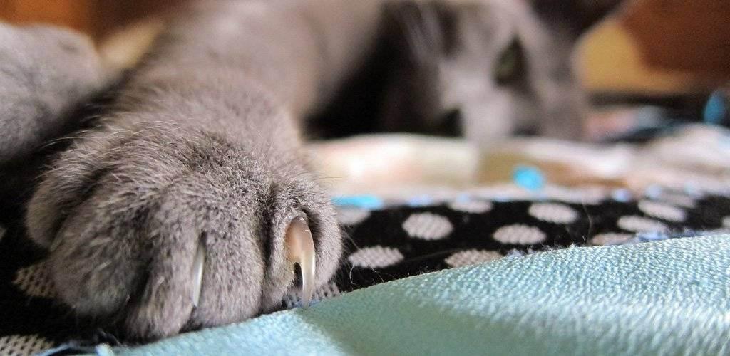У котенка режутся зубы: что надо делать и что не надо. молочные зубы у кошек: когда у котят появляются зубы? какие зубы у кошки растут