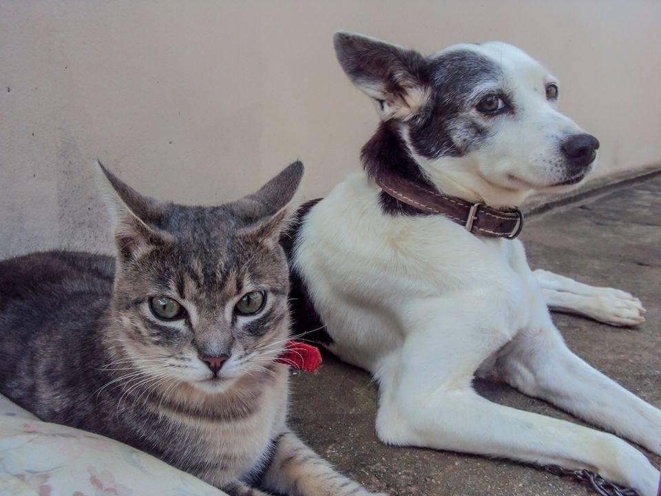 Собака или кошка - кто лучше подходит для человека?