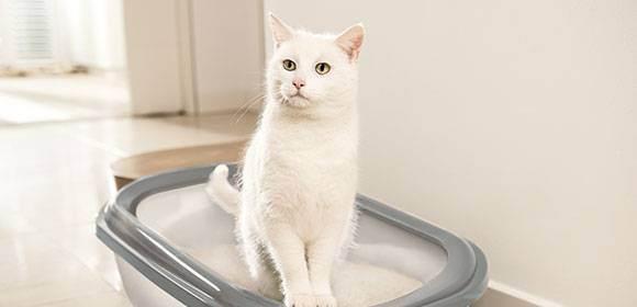 Поведение кошки: почему кот или котенок ведет себя очень агрессивно, кусается и без причины нападает на хозяина?