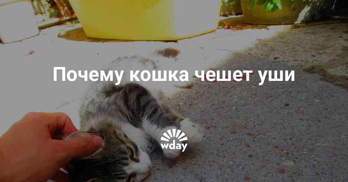 Кот дрожит и мяукает. почему котенок дрожит