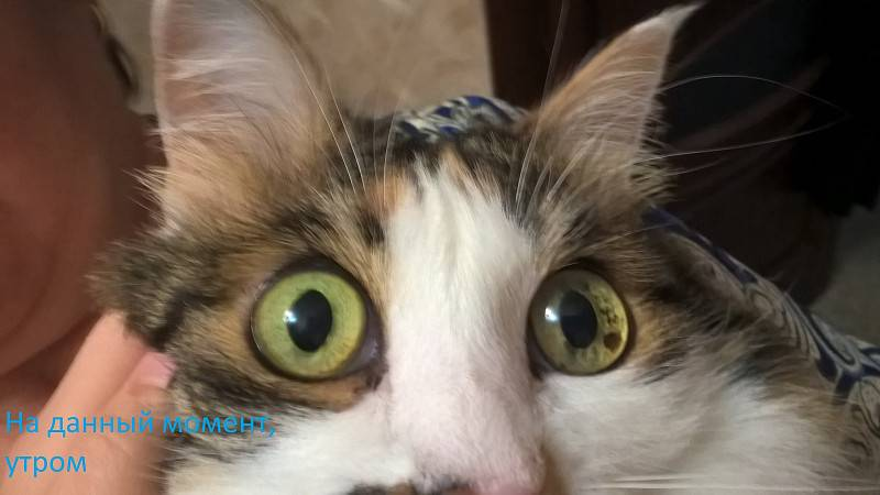 Расширенные зрачки у кошки