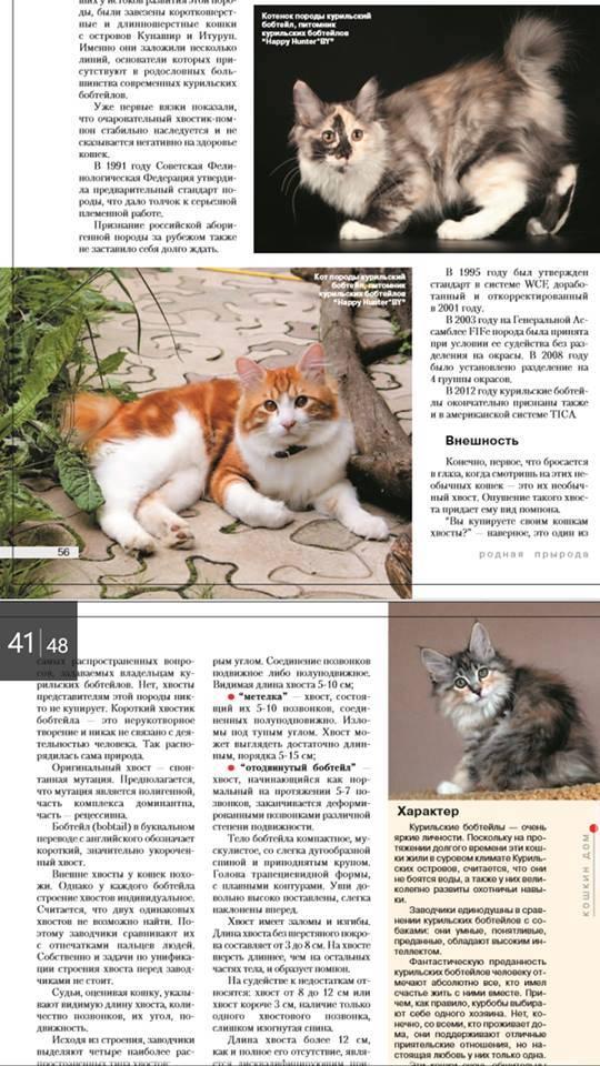 Гималайская кошка: стандарт породы, характер, особенности ухода, стоимость котят