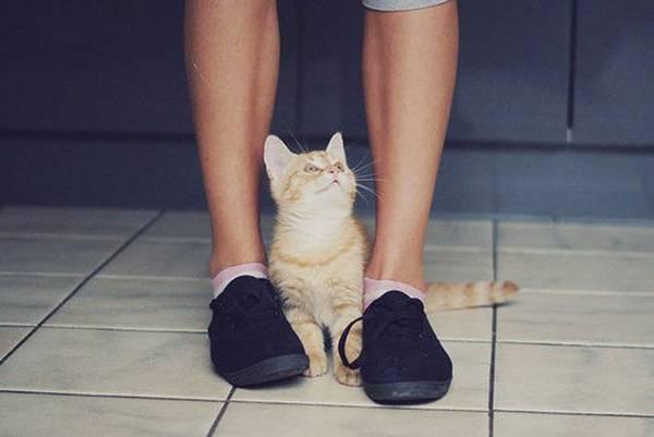 Почему кошки трутся об ноги
