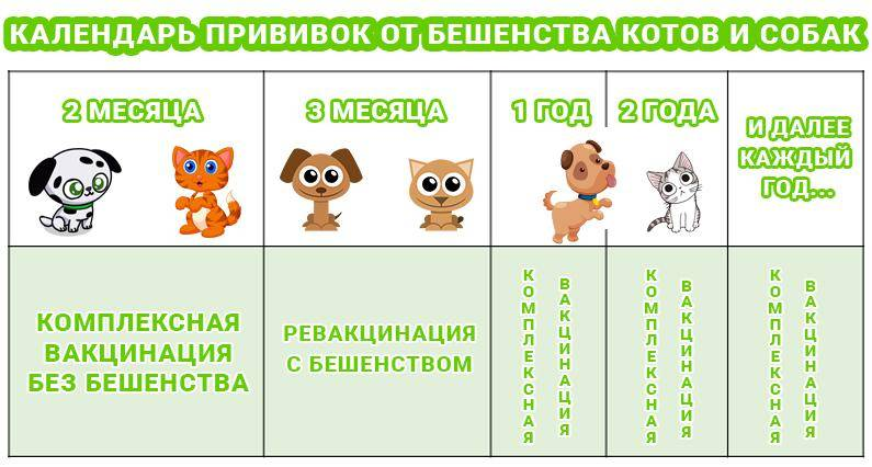 Какие прививки делают котятам. когда делать прививки котятам