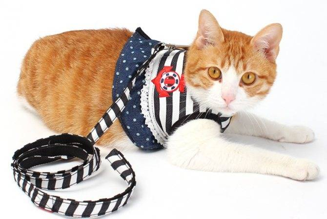 Поводок для кошки: 120 фото, достоинства и недостатки применения кошачьих поводков