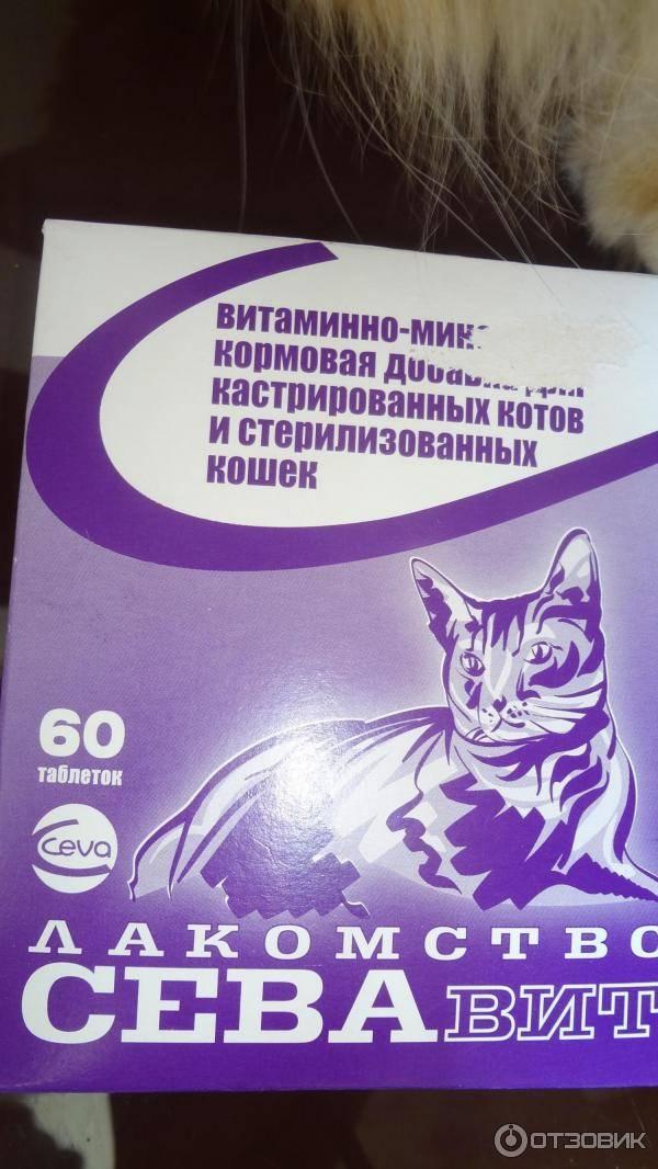 10 лучших витаминов для кошек - рейтинг 2020