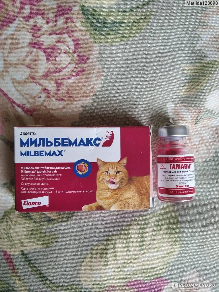 Таблетка от глистов для кошек - какие есть и как принимать