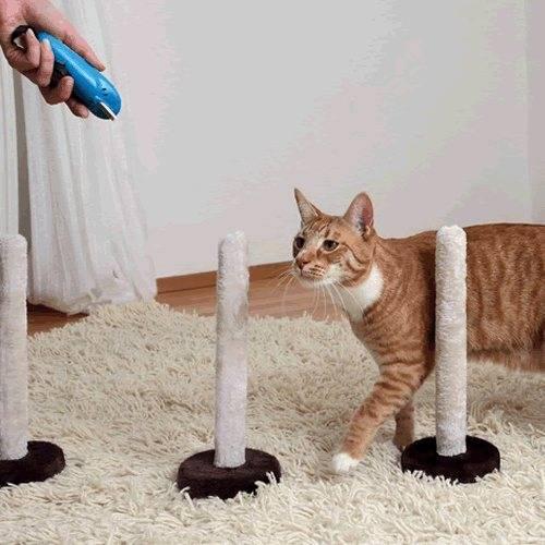 Как дрессировать кота, кошку или котёнка в домашних условиях: полезные советы и рекомендации по дрессировке