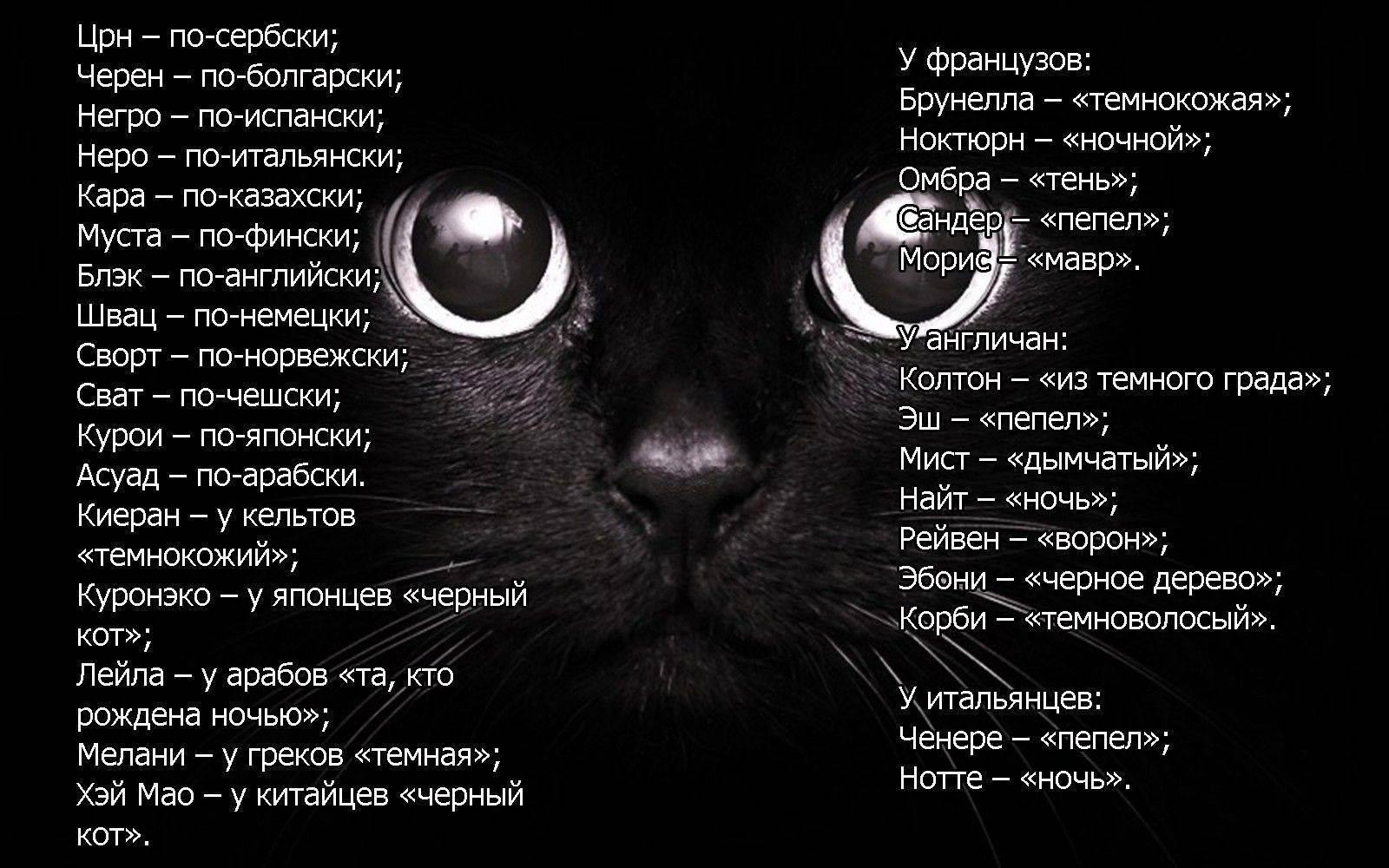 Как можно прикольно назвать кошку?
