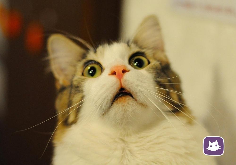 Что делать если кошка рычит без причины?